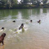 Rettungshunde haben Hitzefrei